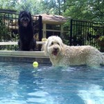Caya_Summer_2012_chillin_in_her_pool