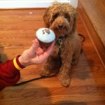 Coopers_1st_Birthday_1_Lincheck_f1b_mini_goldendoodle_from_Paisley