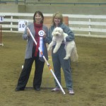 Parris_William_f1_mini_goldendoodle_from_Blueridgepuppies_earns_her_MACH_award_in_agility