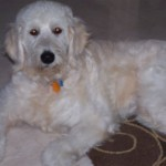 Riley_Stormy_and_Abby_puppy_Sept_06