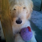Rosco_Damien_with_his_toy_June_09