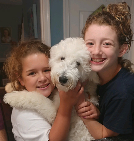 winnie goldendoodle blue ridge puppies for sale breeder